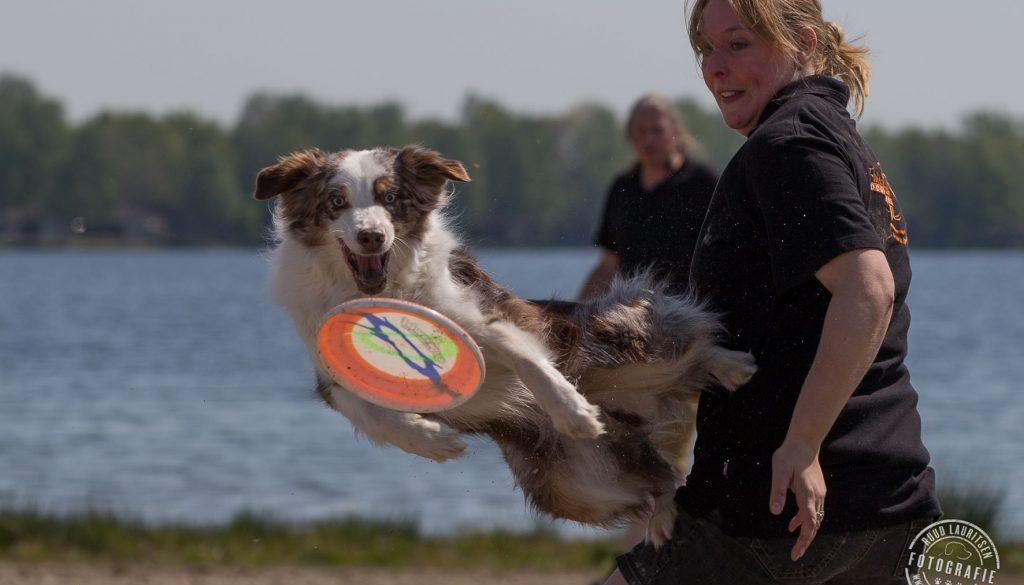 Fly 'em High dogfrisbee